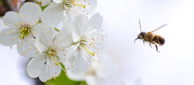 W tym tygodniu w PE: skład PE po 2019, walka ze zmianą klimatu, dobrostan pszczół